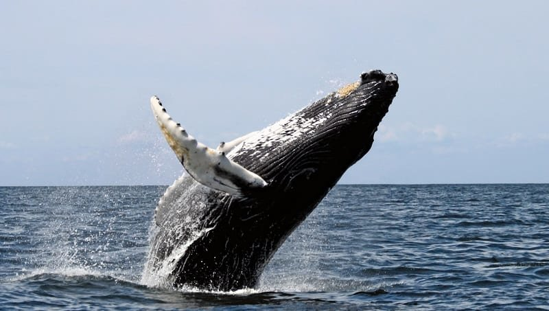 The Whale's Tale / Whale Watching Tours - Depoe Bay