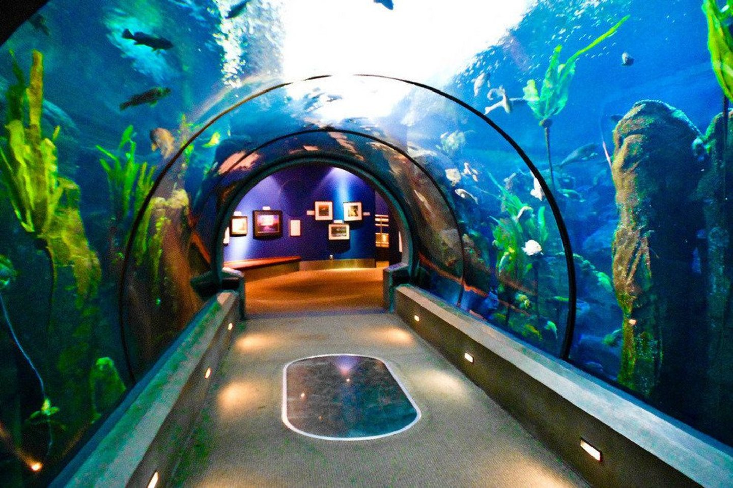 Visit the Oregon Coast Aquarium while in town.